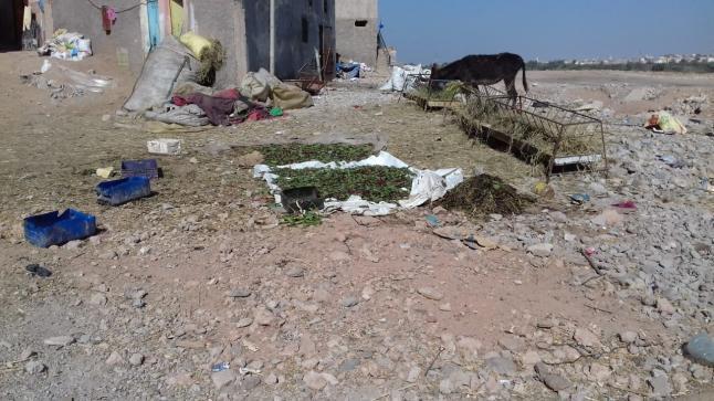 الأغنام بمدينة أزرو ايت ملول تثير غضب الساكنة .