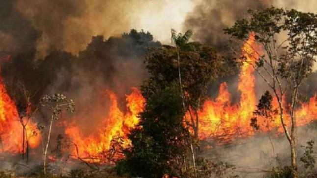 إعتقال قاصرين وراء إضرام النار بغابة المضيق